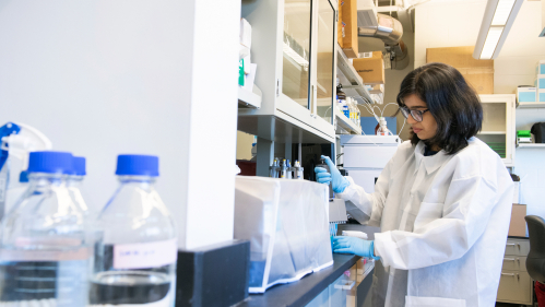 Graduate student Kiran Deshpande (Pharm' 22) works in the Ernest Mario School of Pharmacy Kagan Lab