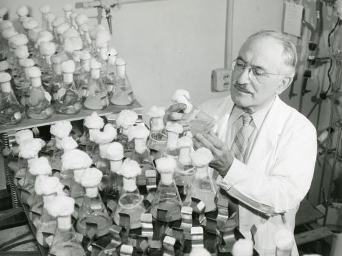 Selman Waksman in his lab